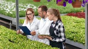 Grupo de especialista agrícola profissional novo que discute o trabalho junto na estufa video estoque