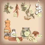Grupo de especiarias e de ervas. ilustração stock