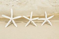 Grupo de estrellas de mar Fotos de archivo