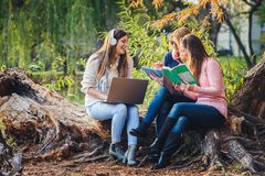 Grupo de estudantes fêmeas que trabalham no projeto da escola imagem de stock