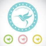 Grupo de etiqueta do colibri Imagem de Stock Royalty Free