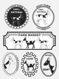 Grupo de etiquetas da cabra, de crachás e de elementos do projeto Vetor Foto de Stock