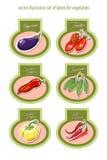 Grupo de etiquetas do vetor com vegetais Vetor Fotografia de Stock Royalty Free
