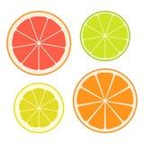 Grupo de fatias de citrinas diferentes isoladas no fundo branco Fruta suculenta Ilustração do vetor Foto de Stock Royalty Free