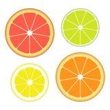Grupo de fatias de citrinas diferentes isoladas no fundo branco Fruta suculenta Ilustração do vetor Imagens de Stock Royalty Free