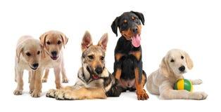 Grupo de filhotes de cachorro imagens de stock royalty free