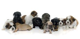 Grupo de filhotes de cachorro fotos de stock royalty free