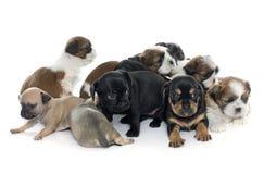 Grupo de filhotes de cachorro fotos de stock