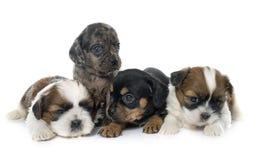 Grupo de filhotes de cachorro fotografia de stock royalty free