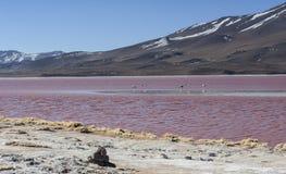 Grupo de flamencos rosados en el agua colorida de Laguna Colorada, una parada popular en el Roadtrip a Uyuni Salf plano, Bolivia Fotografía de archivo libre de regalías
