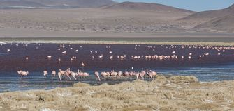 Grupo de flamencos rosados en el agua colorida de Laguna Colorada, una parada popular en el Roadtrip a Uyuni Salf plano, Bolivia Imágenes de archivo libres de regalías