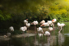 Grupo de flamingos Fotos de Stock