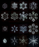 Grupo de flocos de neve naturais das fotos foto de stock royalty free