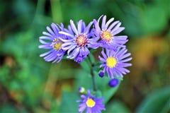 Grupo de flor imagem de stock royalty free