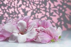 Grupo de flor da magnólia em uma placa branca foto de stock royalty free