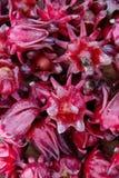 Grupo de flor fresca del roselle Fotos de archivo libres de regalías