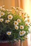 Grupo de flor no sol da tarde imagens de stock