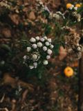 Grupo de flor pequena na montanha Imagens de Stock Royalty Free