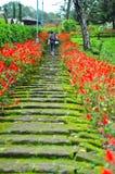 Grupo de flor rosada en paisaje tan hermoso de la naturaleza del jardín Foto de archivo