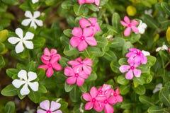 Grupo de flora Fotos de archivo