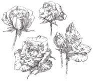 Grupo de flores ilustração stock