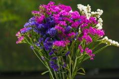 Grupo de flores foto de stock