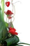 Grupo de flores. fotos de stock royalty free