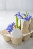 Grupo de flores adiantadas da mola Fotografia de Stock Royalty Free