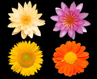 Grupo de flores aisladas sobre fondo negro Fotos de archivo libres de regalías