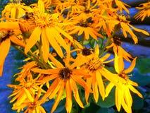 Grupo de flores alaranjadas foto de stock
