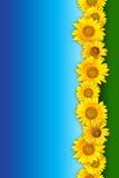 Grupo de flores amarelas fotografia de stock royalty free