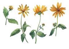 Grupo de flores amarelas ilustração stock