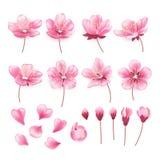 Grupo de flores bonitas da árvore de cereja isoladas no fundo transparente Coleção da flor cor-de-rosa de sakura ou de maçã ilustração do vetor