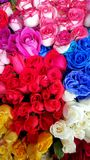 Grupo de flores coloridas Fotos de Stock