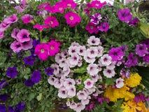 Grupo de flores colorido Imagem de Stock Royalty Free