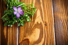 Grupo de flores com açafrões Imagem de Stock