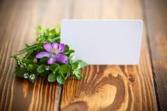 Grupo de flores com açafrões Imagens de Stock