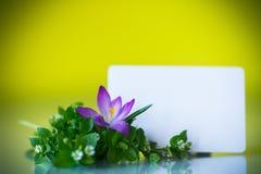 Grupo de flores com açafrões Fotos de Stock Royalty Free