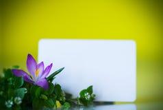 Grupo de flores com açafrões Fotos de Stock