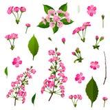 Grupo de flores cor-de-rosa da árvore de cereja ilustração royalty free