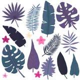 Grupo de flores cor-de-rosa, de verde e de Violet Exotic Leaves ilustração stock