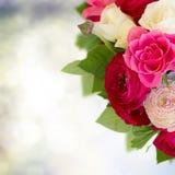 Grupo de flores cor-de-rosa do ranúnculo Fotos de Stock Royalty Free