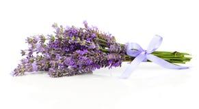 Grupo de flores da alfazema Foto de Stock Royalty Free