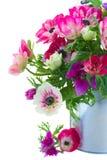 Grupo de flores da anêmona Fotos de Stock