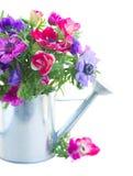 Grupo de flores da anêmona Imagens de Stock