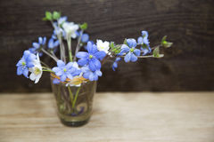 Grupo de flores da mola Fotografia de Stock