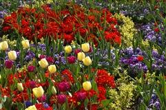 Grupo de flores da mola Fotos de Stock Royalty Free