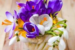 Grupo de flores da mola Açafrão e Snowdrops na parte traseira de madeira Imagens de Stock Royalty Free