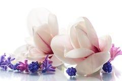 Grupo de flores da mola com magnólia Imagem de Stock