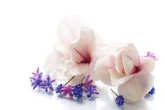 Grupo de flores da mola com magnólia Fotos de Stock Royalty Free